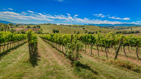 Vineyards in Montefalco - Umbria - Italy Royalty Free Stock Photos