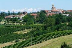 Vineyards of Monterrato on Piedmont Royalty Free Stock Photography
