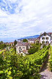 Vineyards in Montreux Town Stock Images