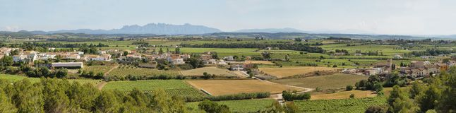 Vineyards with Montserrat peaks at background Royalty Free Stock Photography