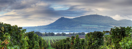 Vineyards in Moravia Stock Photos