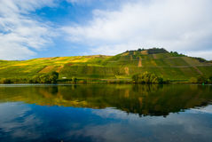Vineyards on the mosel stock photo