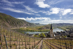 Vineyards at the Mosel bow near Bremm. Bow of the Mosel river, vineyards of Calmont hills in foreground stock photo
