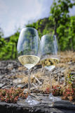 Vineyards at the Mosel, Germany Stock Photos