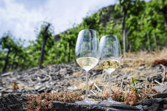 Vineyards at the Mosel, Germany Royalty Free Stock Photography