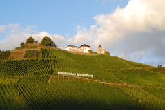 Vineyards on the Mosel river near Zell Stock Photos