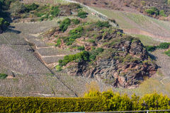 Vineyards on the Mosel river in spring. Royalty Free Stock Image