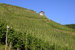 Vineyards on the Moselle and half-timbered house Stock Images