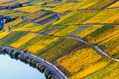 Vineyards in the Moselle Valley in bright autumn colors and sunlight Royalty Free Stock Photo