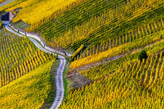 Vineyards in the Moselle Valley in bright autumn colors and sunlight Royalty Free Stock Photography