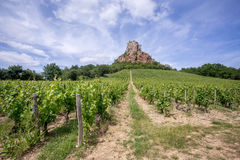 Vineyards with a mountain in the background Stock Photo