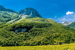 Vineyards by mountain. Royalty Free Stock Image