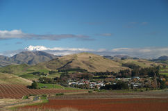 Vineyards and mountains. Around Seddon, New Zealand Royalty Free Stock Images