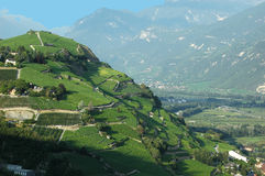 Vineyards in the mountains Stock Photography