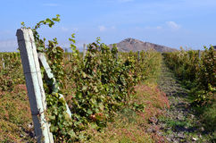 Vineyards in the mountains Royalty Free Stock Images