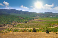Vineyards with the mountains on the background royalty free stock images
