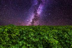 Vineyards and mountains on the the background of amazing starry sky. Vineyards and mountains on the the background of amazing starry sky royalty free stock image