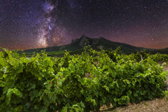 Vineyards and mountains Royalty Free Stock Images