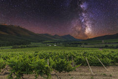 Vineyards and mountains Stock Image