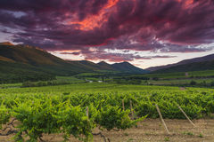 Vineyards and mountains on the background of  sunset. Stock Image