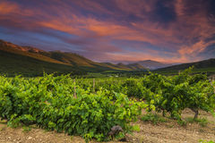 Vineyards and mountains on the background of  sunset. Royalty Free Stock Images