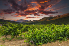Vineyards and mountains on the background of  sunset. Royalty Free Stock Photography