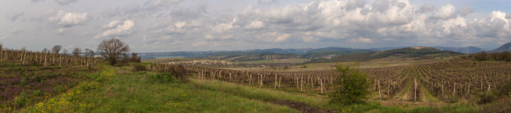 Vineyards in the mountains of Crimea Royalty Free Stock Images