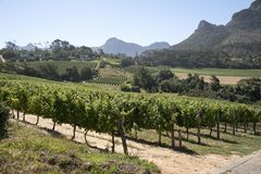 Vineyards and mountains in the Western Cape region of Southern Africa Stock Photo