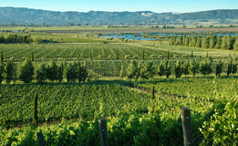 Vineyards in Napa, California Stock Photos