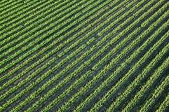 Vineyards in Napa Valley Stock Photo