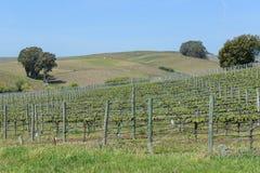 Vineyards in Napa Valley California Stock Photos