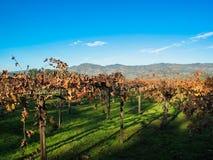Vineyards in Nappa Valley, California Stock Image