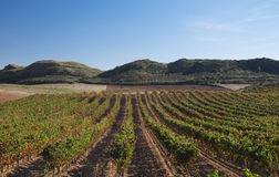 Vineyards in Navarre, Barbarin, Spain Stock Photography