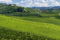 Free Vineyards Near Barbaresco, Cuneo, In Langhe Stock Photo - 131057270
