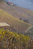 Vineyards near Barolo, Piemonte Italy Royalty Free Stock Photo