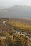 Vineyards near Barolo, Piemonte Italy Stock Images