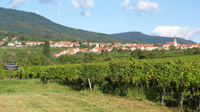 Vineyards near Barr. The Alsatian Village of Barr and its vineyards stock photo