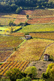 Vineyards near Beaujeu Royalty Free Stock Photos