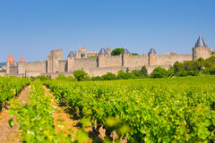 Vineyards near the Cite in Carcassone Royalty Free Stock Photos