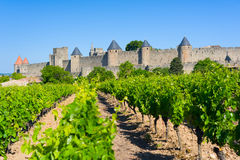 Vineyards near the Cite in Carcassone Royalty Free Stock Image