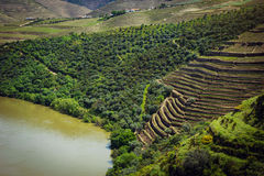 Vineyards near Duoro river in Portugal royalty free stock image