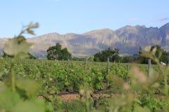Vineyards near Franschhoek royalty free stock photos