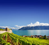 Vineyards near Geneva lake Stock Image