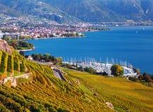 Vineyards near Geneva lake Royalty Free Stock Photo