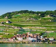 Vineyards near Geneva lake Stock Images