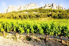 Vineyards near Gigondas at Col Du Cayron, Provence, France. Outdoor, outdoors, outside, exterior, exteriors, europe, western, provence-alpes-cote, dazur royalty free stock photos