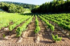 Vineyards near Gigondas, Provence, France. Outdoor, outdoors, outside, exterior, exteriors, europe, western, provence-alpes-cote, dazur, vaucluse, cotes, du royalty free stock photo