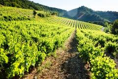 Vineyards near Gigondas, Provence, France. Outdoor, outdoors, outside, exterior, exteriors, europe, western, provence-alpes-cote, dazur, vaucluse, cotes, du royalty free stock photos