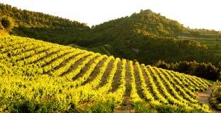 Vineyards near Gigondas, Provence, France. Outdoor, outdoors, outside, exterior, exteriors, europe, western, provence-alpes-cote, dazur, vaucluse, cotes, du stock photography