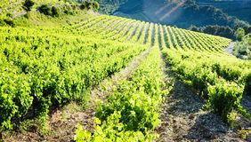 Vineyards near Gigondas, Provence, France. Outdoor, outdoors, outside, exterior, exteriors, europe, western, provence-alpes-cote, dazur, vaucluse, cotes, du royalty free stock images